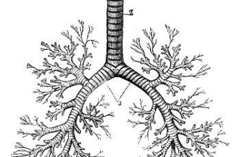 Bronquiectasias não Relacionadas à Fibrose Cística