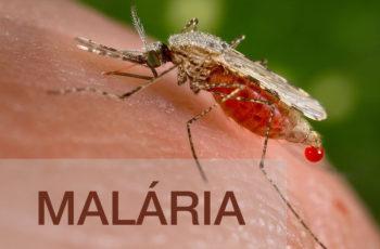 Atualizações em Malária
