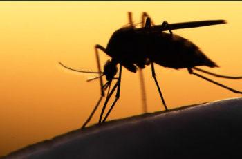 Febre Amarela: informações chave sobre diagnóstico e conduta nos casos suspeitos